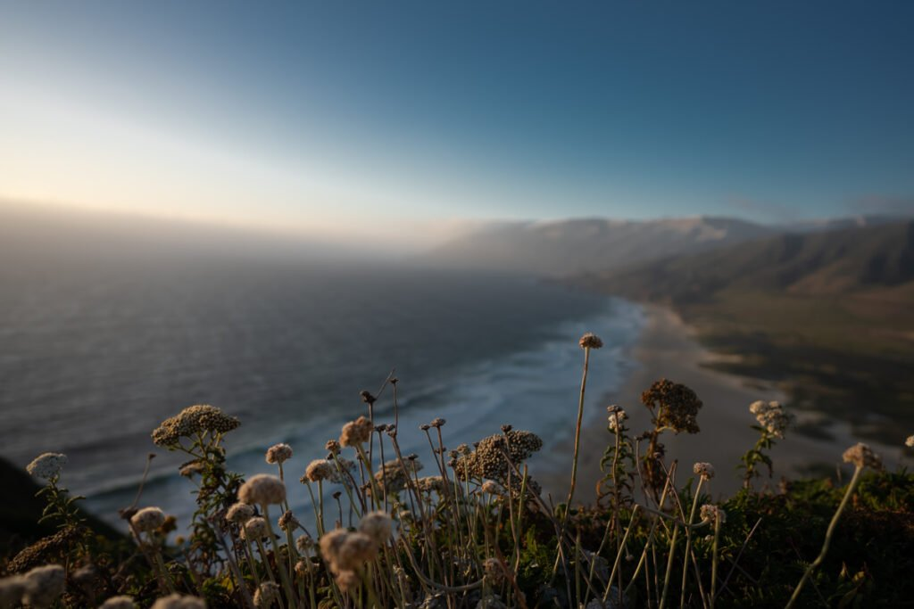 Flowers and the Big Sur Coast at Sunset - Website Design & Photography Based in Chico, CA